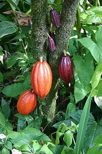 Energizing Herbs ( Maca , Cacao, Chuchuhuasi, Shilajit Resin...)